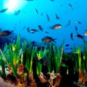 la salud y el mar