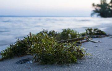 Las algas usos y caracteristicas
