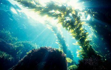 algas, salud y bienestar