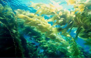 Variedades y tipos de algas
