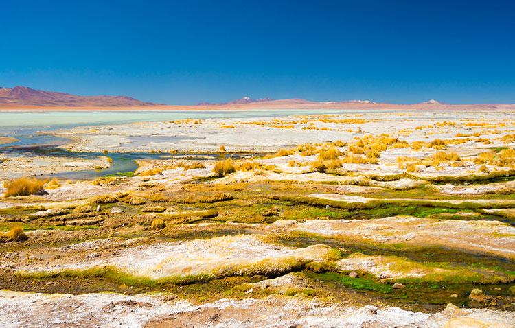 lasa algas en la naturaleza