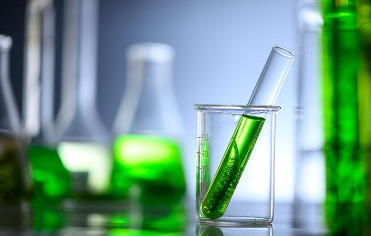 Algas como tratamiento antiviral