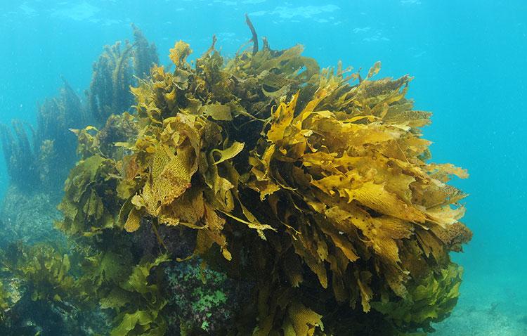 Propiedades de las Algas