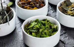 las algas en la nutrición